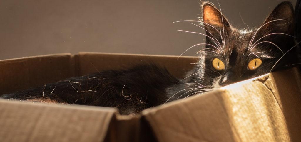 Egal welche Transportbox für die Katze – sie wird sich wahrscheinlich erst einmal in die Verpackung legen ;) Hier finden Sie Tipps, um die richtige Katzentransportbox zu kaufen.