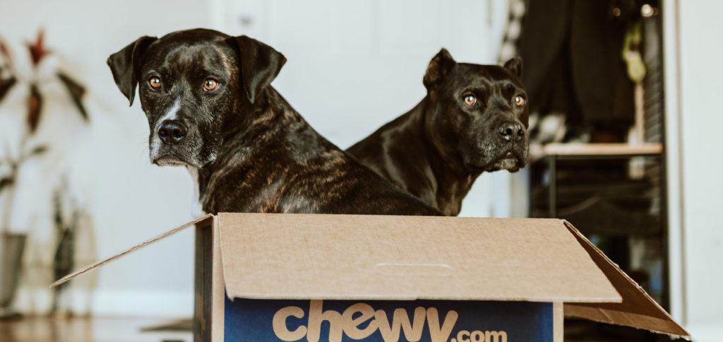 Training: Den Hund an eine Hundetransportbox gewöhnen. Soll das Haustier an die Hundebox gewöhnt werden, geht das Schritt für Schritt. In diesem Ratgeber finden Sie die ausführliche Anleitung. Unten gibt's das Video von einem Hundetrainer.