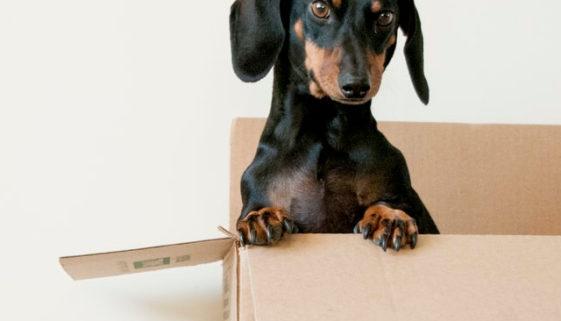 hund-transportbox-geoehnen-hundetransportbox