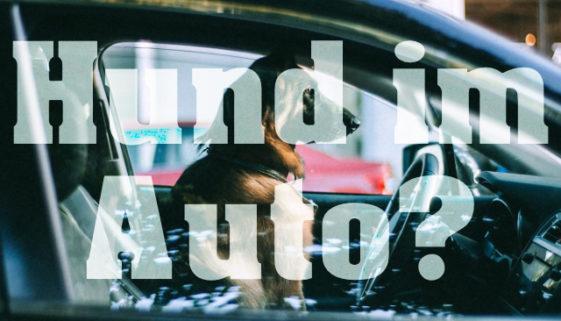 hund-ohne-transportbox-auto