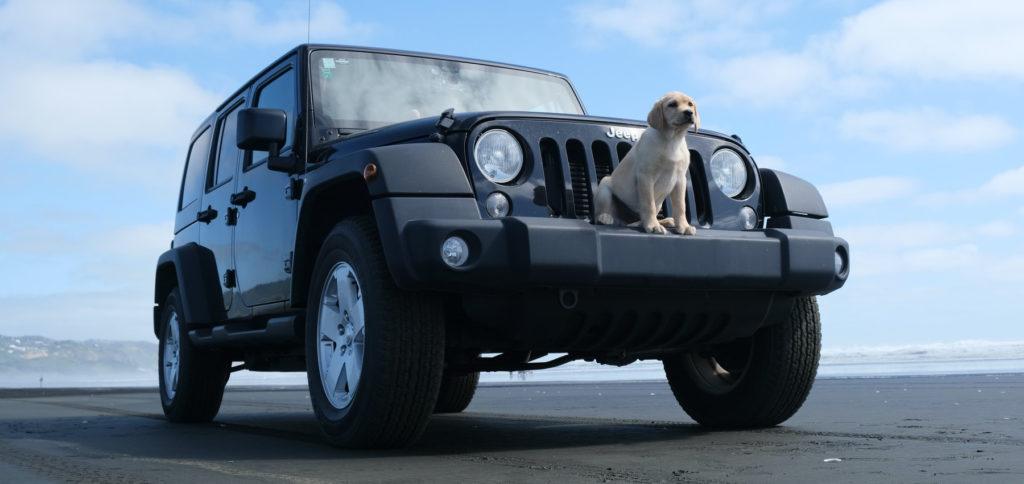 Sorgen Sie dafür, dass Ihr Hund identifizierbar ist, man Sie kontaktieren kann und dass Sie sich mit der Haustier-Einreise der zu bereisenden Länder auskennen. So klappt das Mitnehmen von Hund und Katze im Auto.